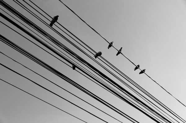 wires_4